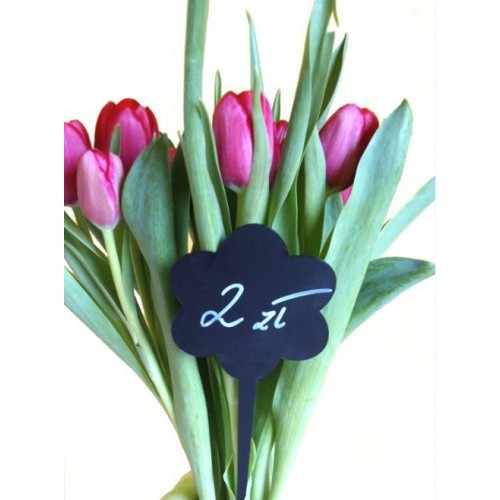 Cenówki KREDOWE do kwiatów lub roślin